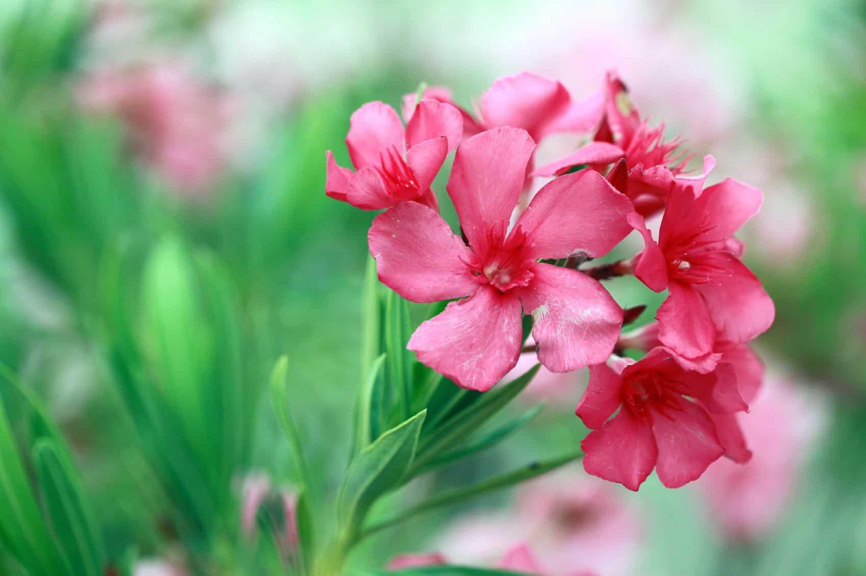 Hoa cấm tặng bạn gái