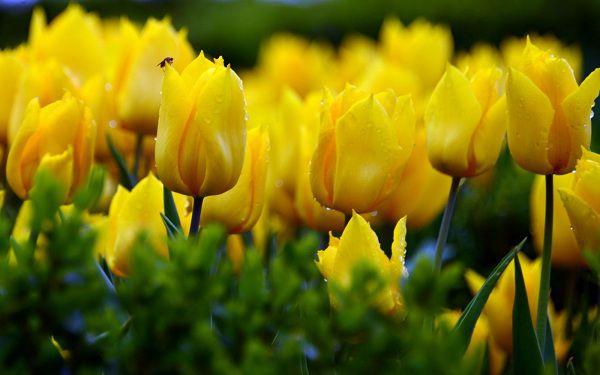 Những loại hoa không được tặng gấu