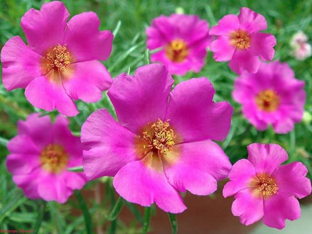 cham soc hoa muoi gio