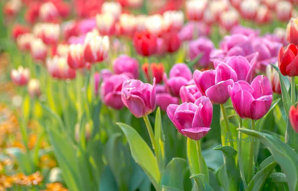 hoa cỏ mùa xuân 1