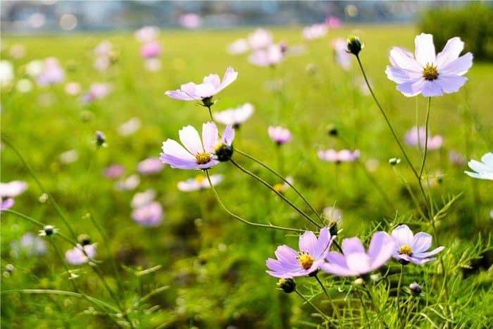 Hoa cỏ mùa xuân 4