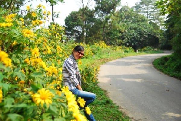 Hoa dã quỳ đà lạt 1