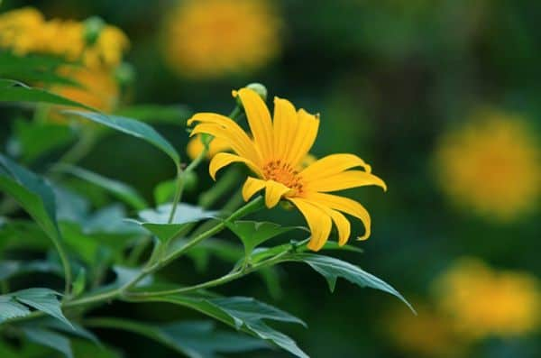 hinh anh hoa da quy 3
