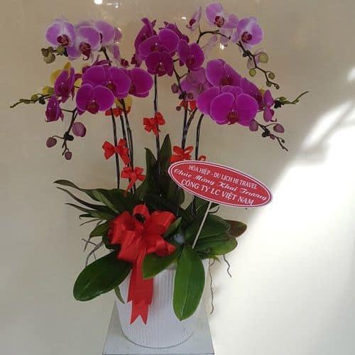 Cửa hàng hoa tươi đường nguyễn hữu cảnh bình thạnh