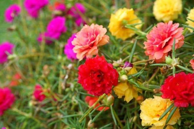 cay hoa muoi gio dep