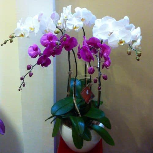 Shop hoa tuoi phuong Tan Dinh