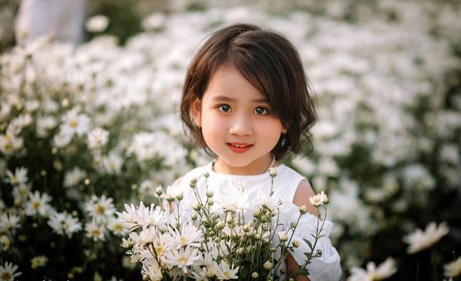 hoa cúc họa mi trong sáng
