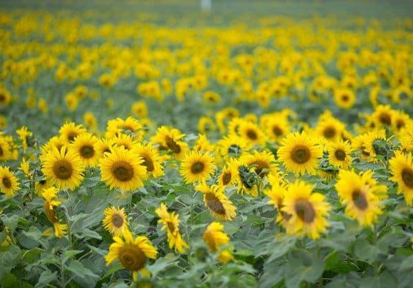 Cua hang hoa tuoi duong nguyen huu tho