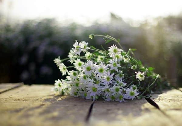 hoa cuc hoa mi 5