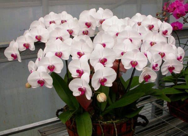 Hoa tuoi nguyen tat thanh quan 4