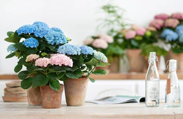 hoa tuoi nguyen khoai
