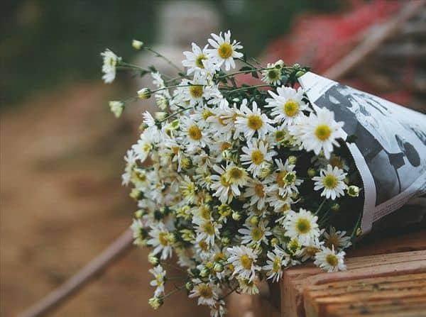 hoa tuoi doan van bo