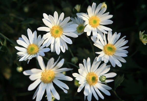 cua hang hoa tuoi doan van bo