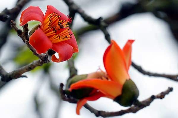 hoa gao 3
