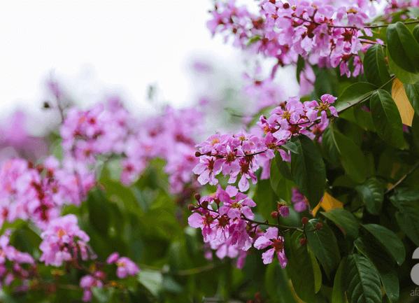 anh dep hoa bang lang 7