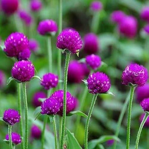 nhung cay hoa bach nhat dep