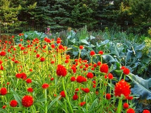 luong hoa bach nhat y nghia
