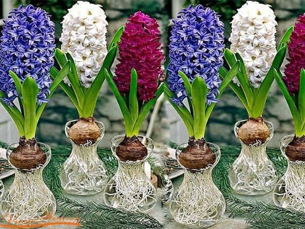 hoa xin loi da lan huong