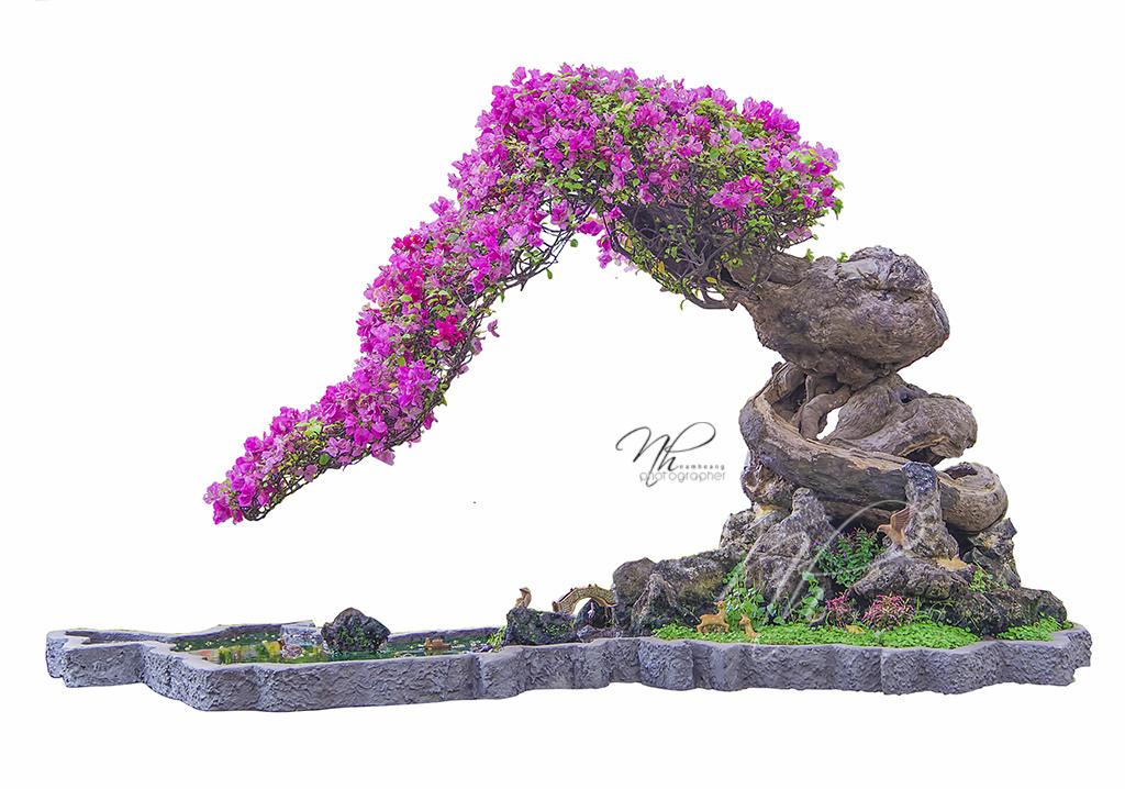 cây hoa giấy bonsai phong thủy