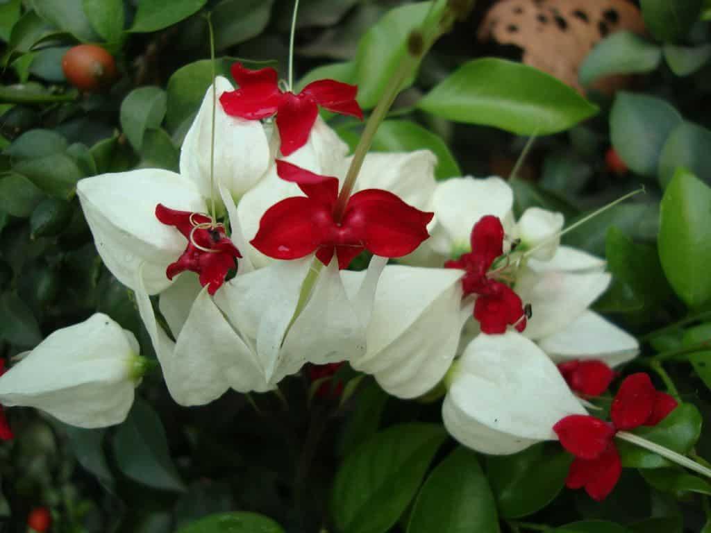 hình ảnh đẹp hoa ngọc nữ