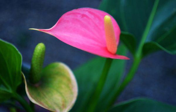 hoa hong mon dep