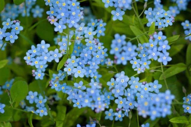 hoa luu ly y nghia
