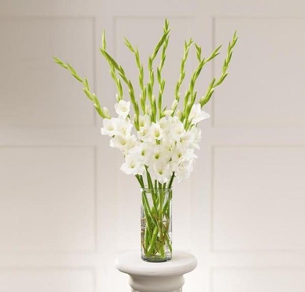 hoa lay on dep