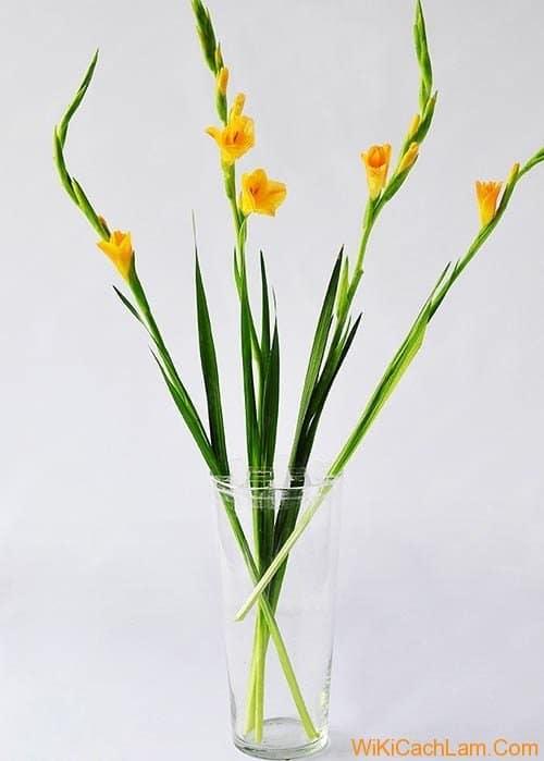 hoa lay on cam dep