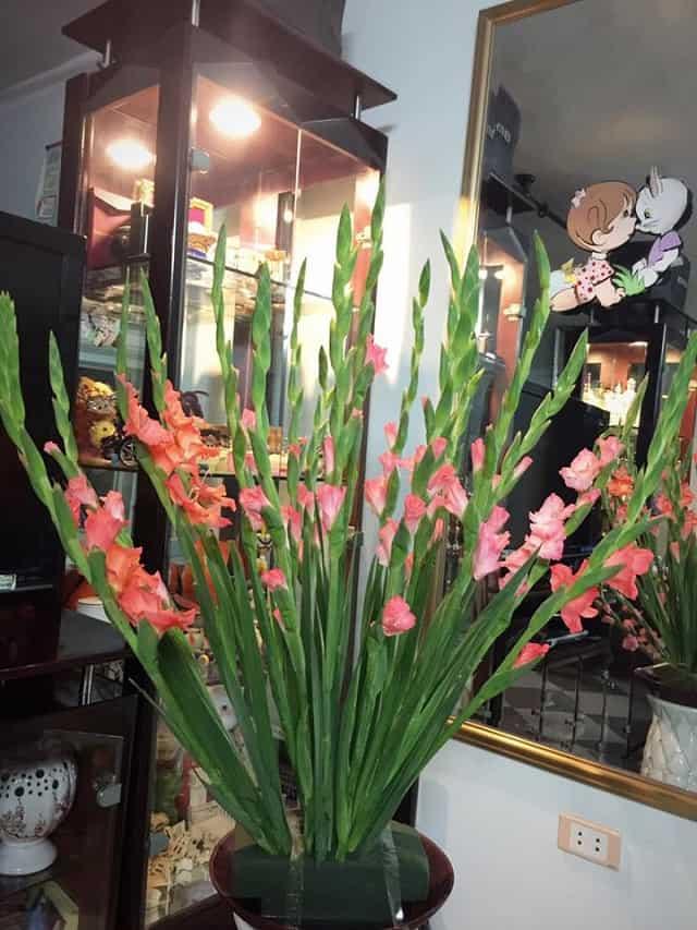 cam hoa lay on dep nhat