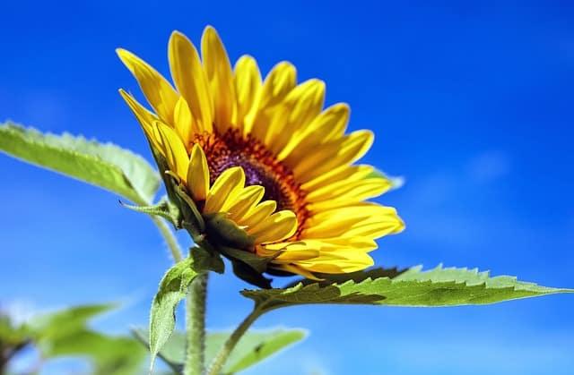 hoa huong dep dep nhat 5