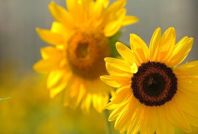 hoa huong dep dep nhat 6
