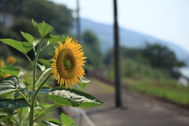 hoa huong dep dep nhat 7