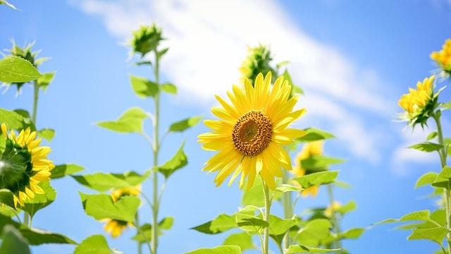 hoa huong dep dep nhat 8