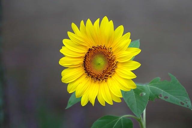 hoa huong dep dep nhat 9