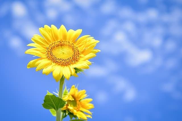 hoa huong dep dep nhat 10