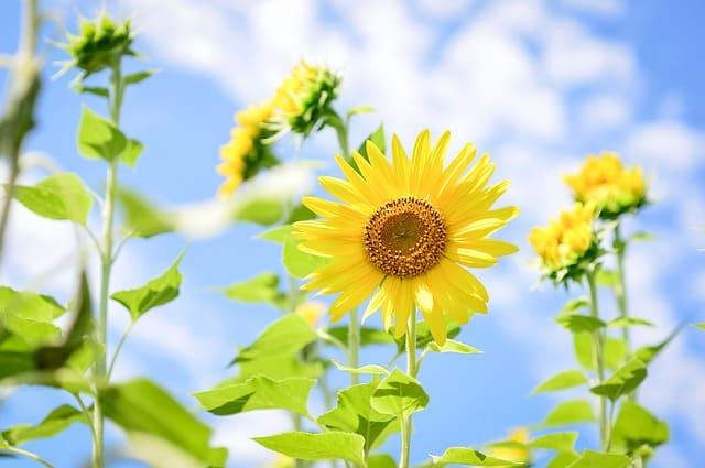 hoa huong dep dep nhat 2