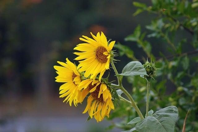 hoa huong dep dep nhat 3