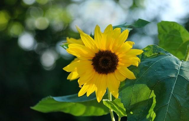 hoa huong dep dep nhat 4