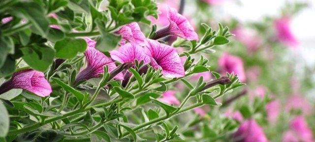 hoa dep de trong