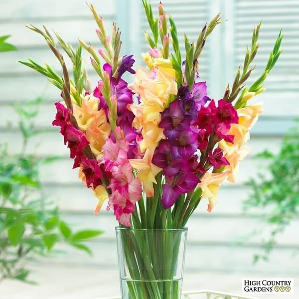 hoa don dep