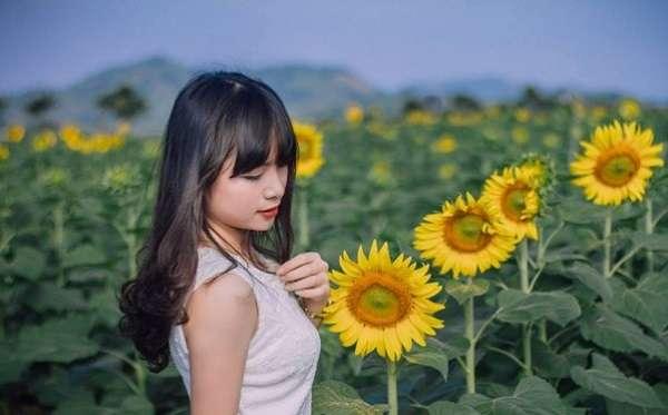 chụp ảnh hoa hướng dương