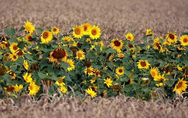 hoa huong dep dep nhat 14