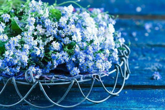 hoa luu ly dep nhat