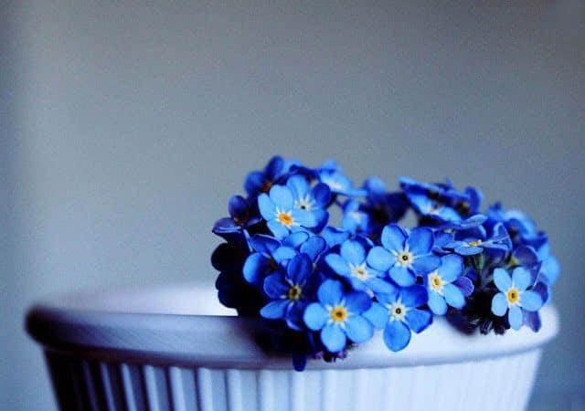 chau hoa luu ly