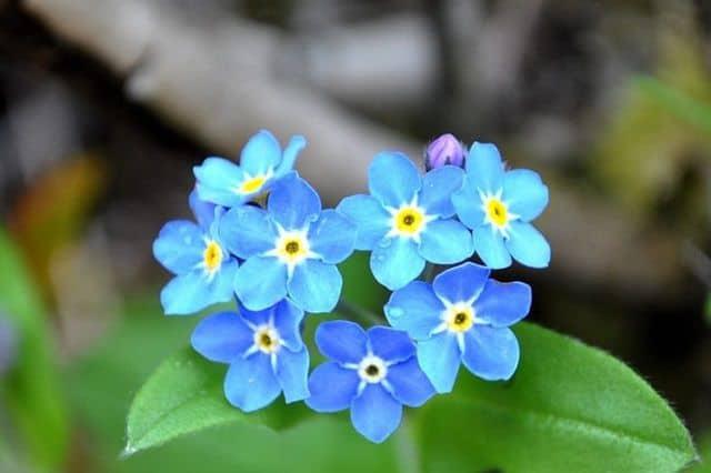 bong hoa luu ly dep