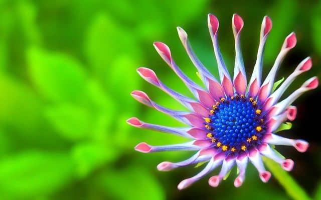 hoa đẹp lạ