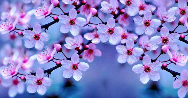 hoa dep hinh nen
