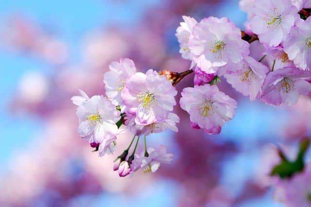 hoa dep la lam