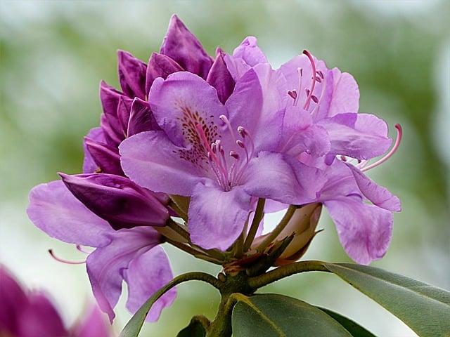 hinh hoa do quyen
