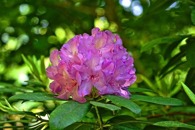 cay hoa do quyen